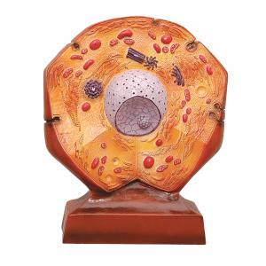 Arco Animal Cell